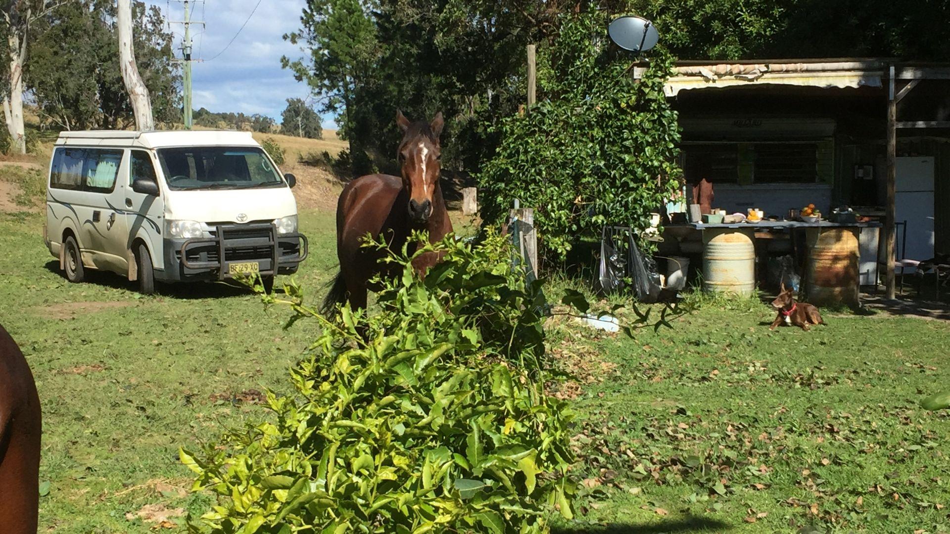 Mallanganee NSW 2469, Image 1