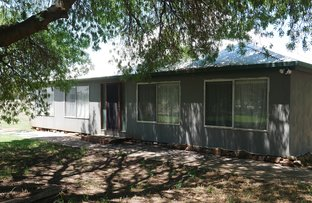 Picture of 79 Grigg Rd.,, Leeton NSW 2705
