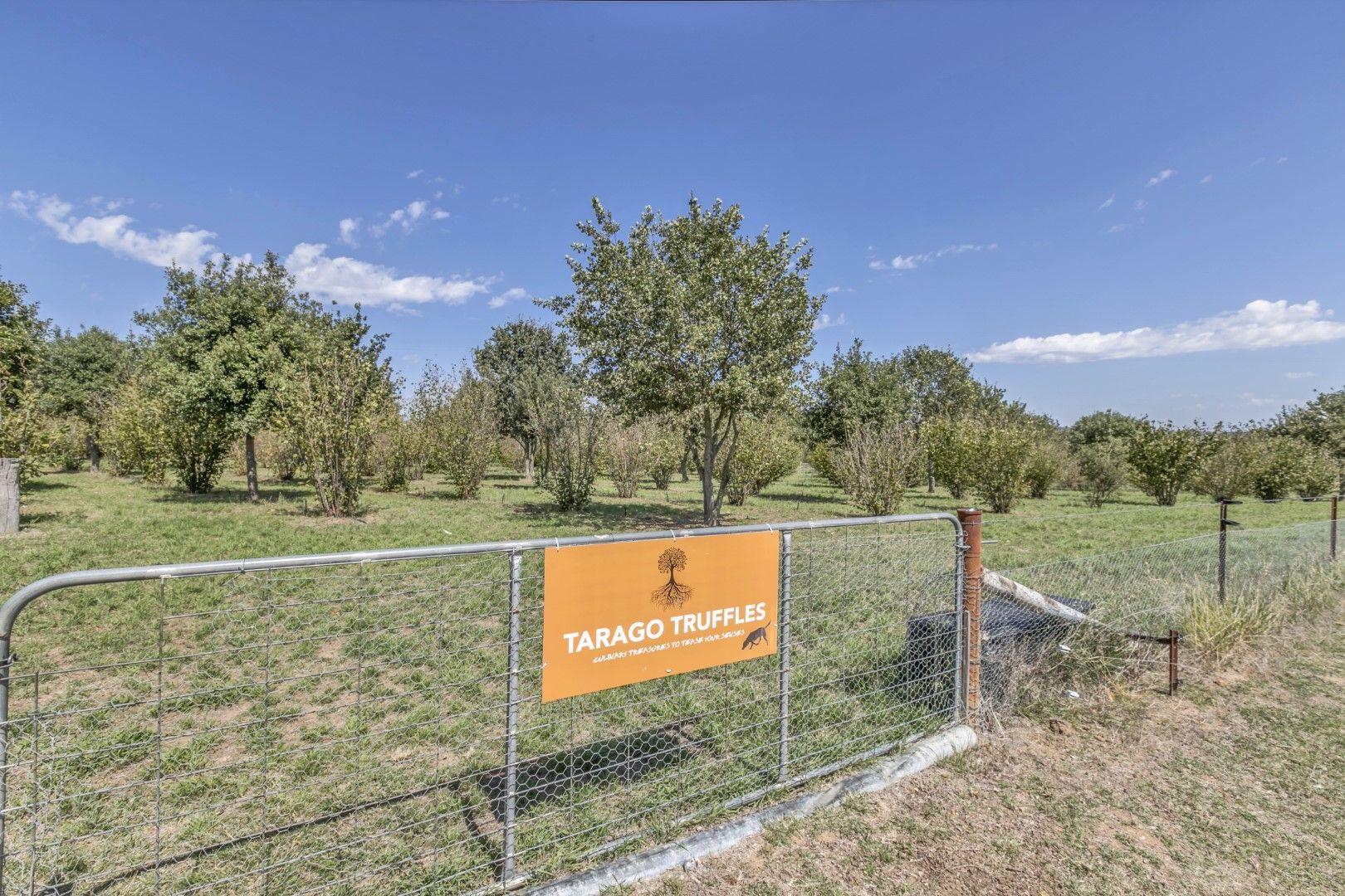 """173 Willandra Lane """"Tarago Truffles"""", Tarago NSW 2580, Image 2"""