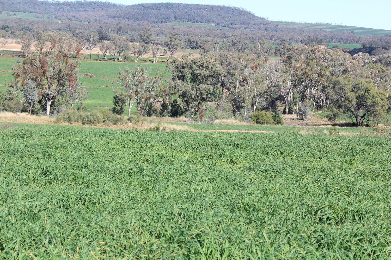 Arcadia, Bellata NSW 2397, Image 0