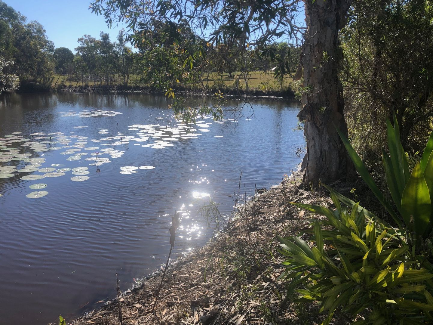 207 Bicentennial Drive, Agnes Water QLD 4677, Image 2