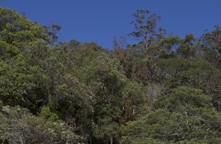 Picture of Lot G Calabash Point, Berowra Waters NSW 2082