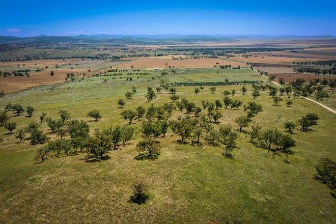 Picture of 21 Big Jacks Creek Rd, WILLOW TREE NSW 2339