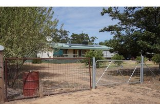 Picture of 1281 Old Warren Rd, Narromine NSW 2821