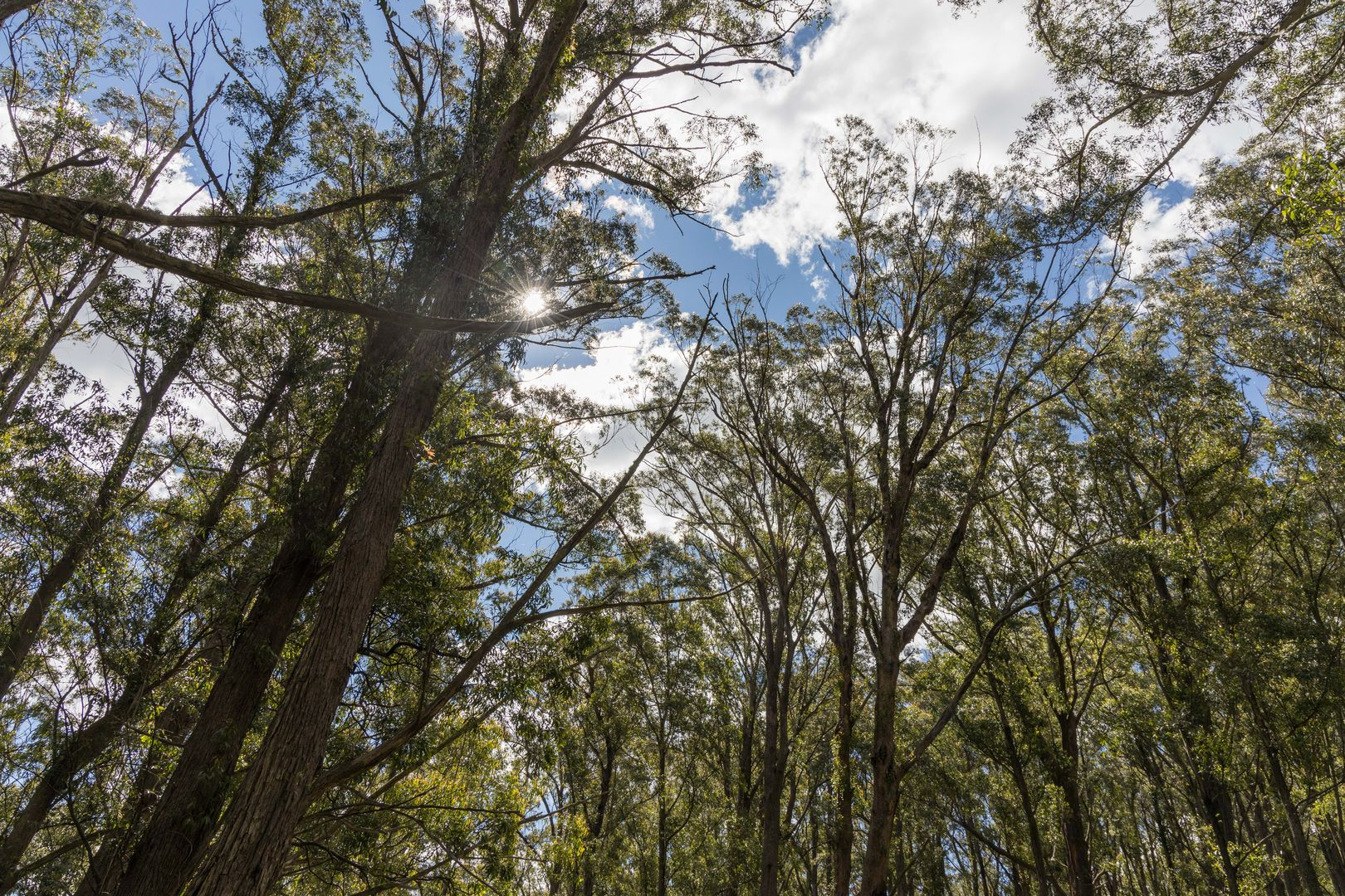 733 Hereford Hall Road, Braidwood NSW 2622, Image 2