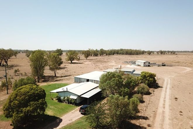 Picture of 3335 Warren Road, GIN GIN NSW 2823