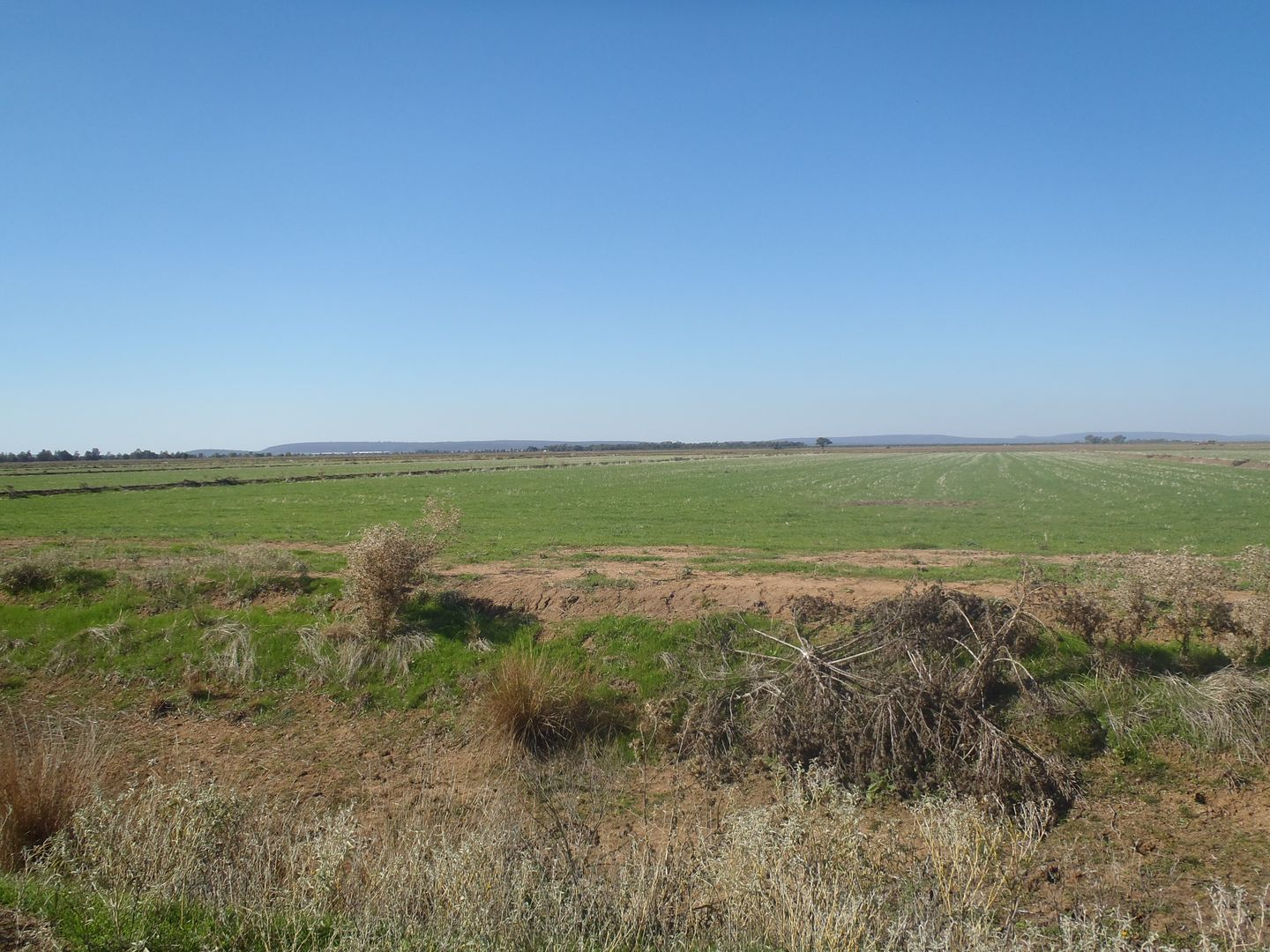FARM 1078 MURRAMI ROAD, Murrami NSW 2705, Image 2