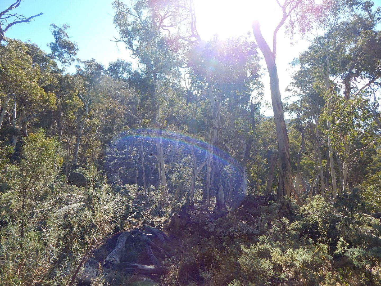 Lot 48 Tea Tree Swamp, Bredbo NSW 2626, Image 1