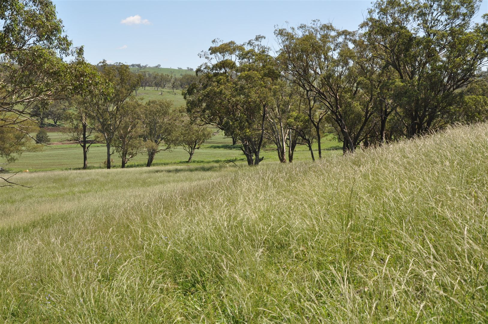 705 Coolah Rd, 'Culbara', Cassilis NSW 2329, Image 2