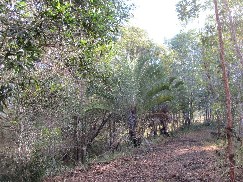 Lot 202 Arborthirtyseven Road, Glenwood QLD 4570, Image 1
