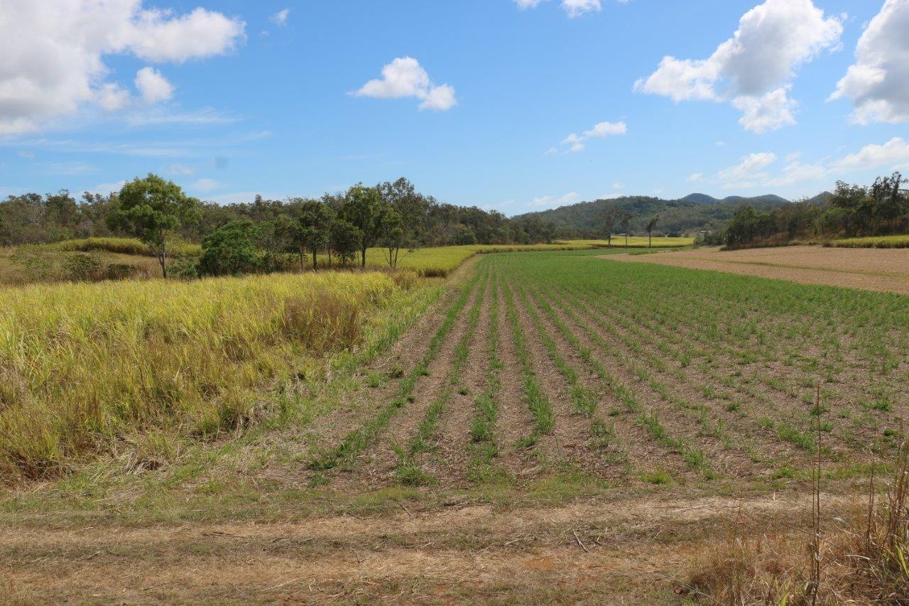 Mount Jukes QLD 4740, Image 2