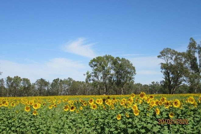 Picture of . Morton Lane, KERANG VIC 3579