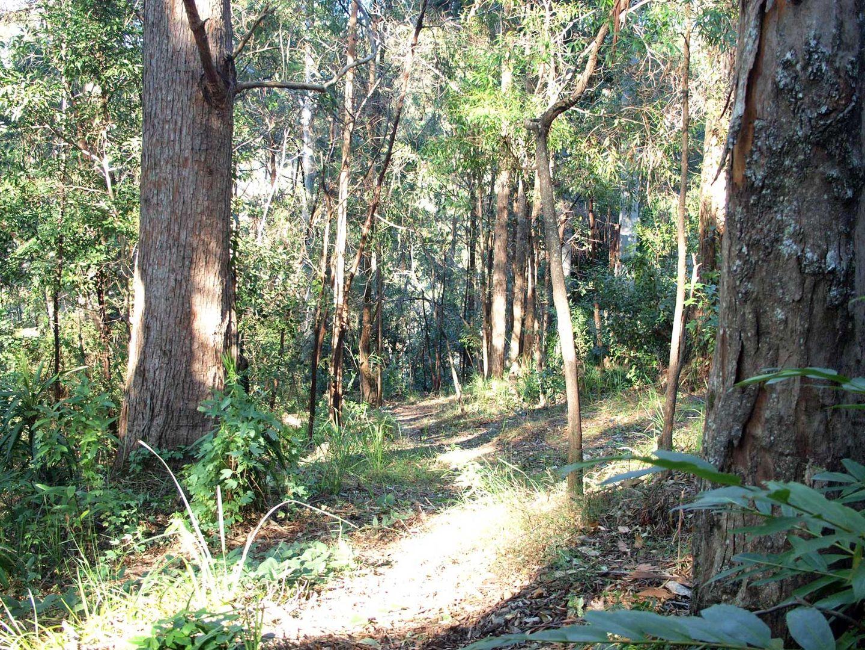 5 Orchis Drive, Tamborine Mountain QLD 4272, Image 1