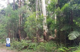 Picture of 1981 Springbrook Road, Springbrook QLD 4213