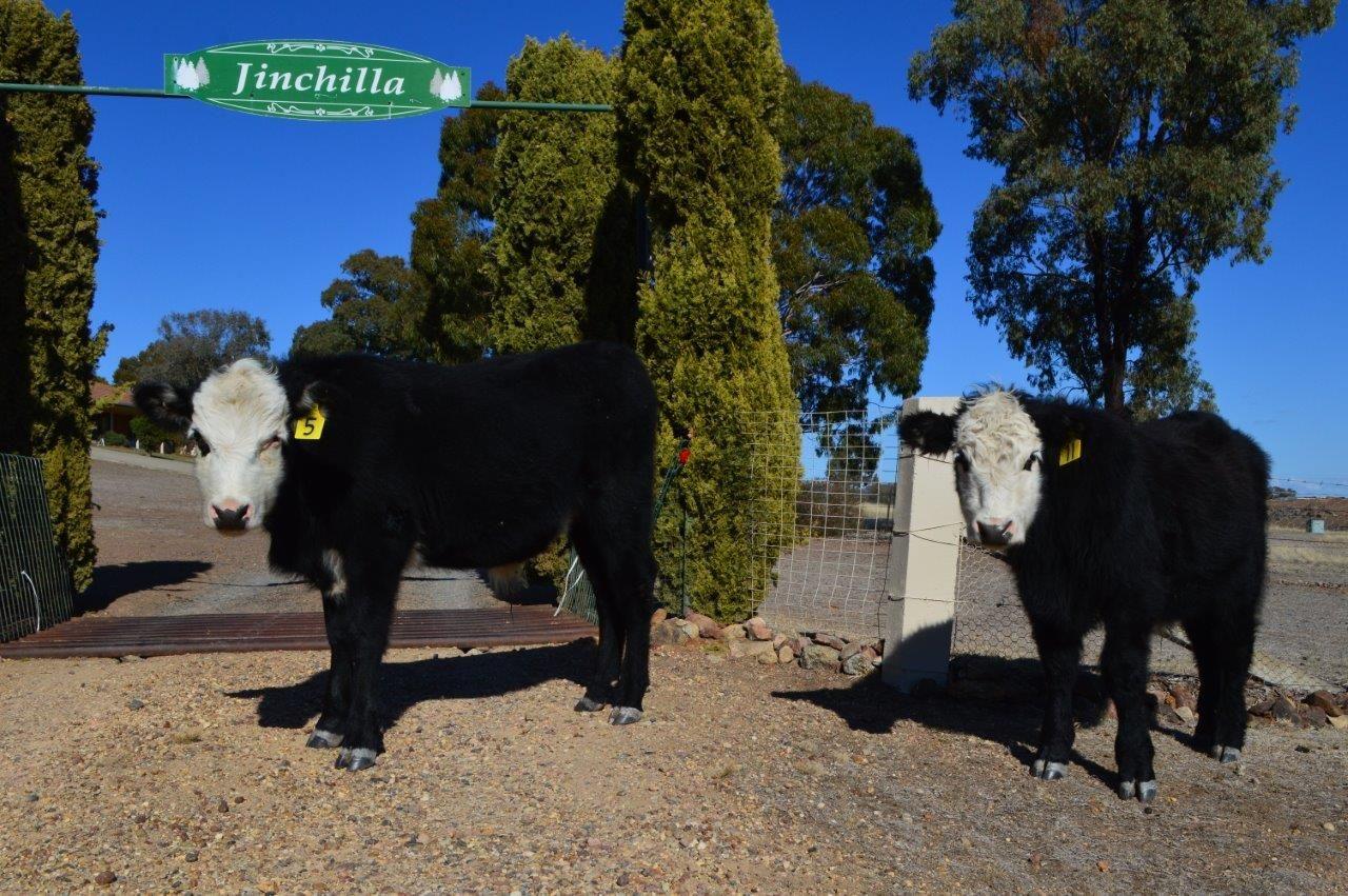 10 Heaths Road, Quirindi NSW 2343, Image 0