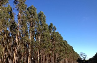 Picture of 21 Forestry Properties, Ballarat Central VIC 3350