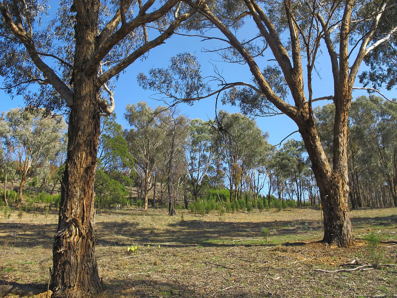 4/206 Lesters Lane, Piambong NSW 2850, Image 2