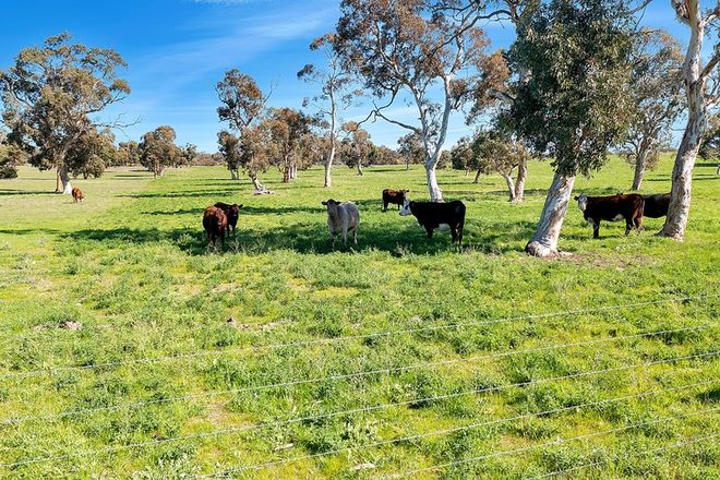 Picture of 7297 Dukes Highway, CULBURRA SA 5261