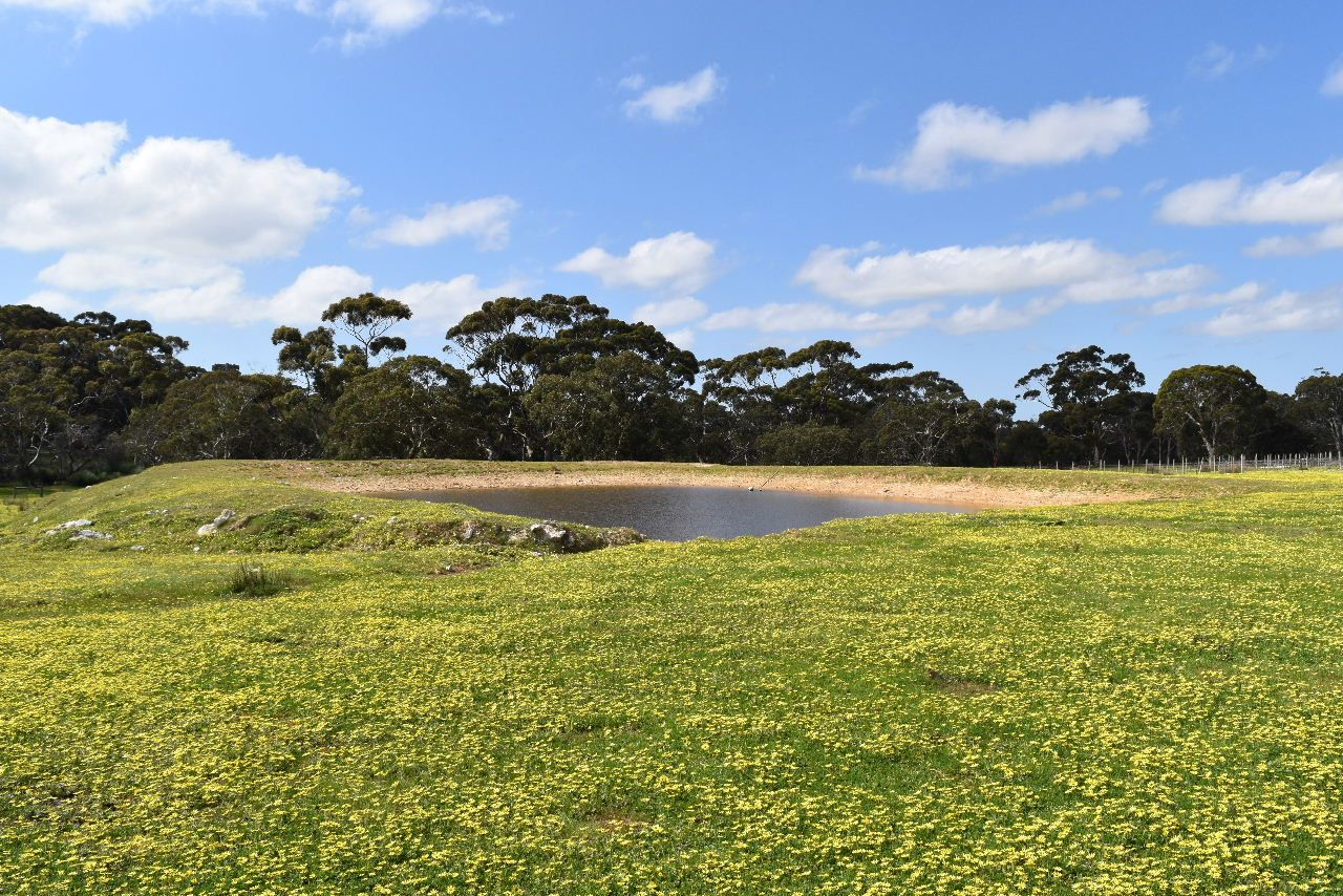 Lot 6 Bark Hut Road, Cassini SA 5223, Image 1