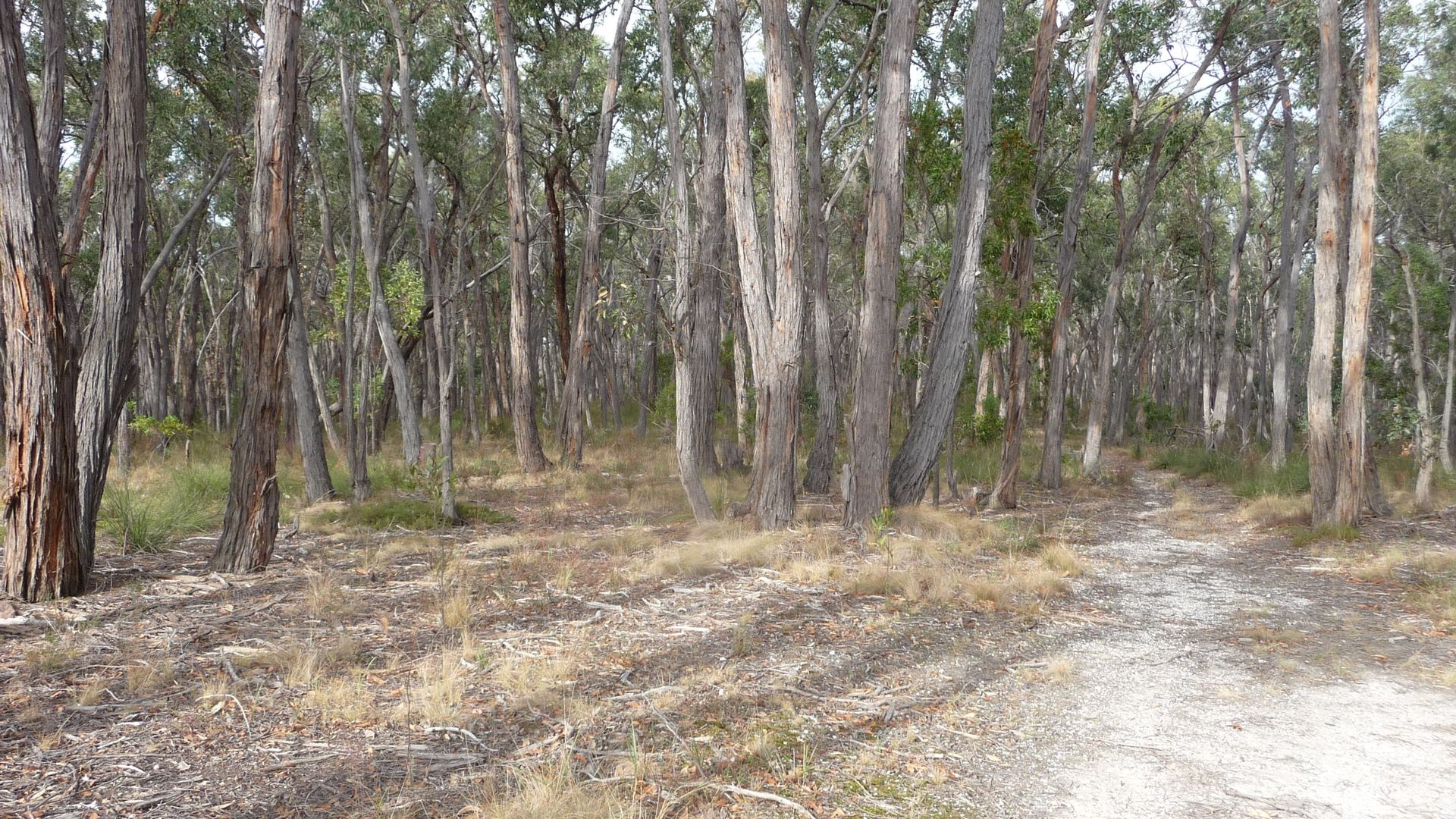 CA 7A Tilligs Road, Scarsdale VIC 3351, Image 1