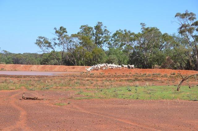 "* ""Bulgoo"" Incorporating ""The Meadows"", Cobar NSW 2835, Image 1"