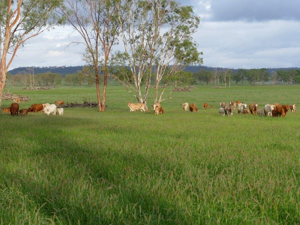 502 Mt Lonsdale Road, Mungallala QLD 4467, Image 0