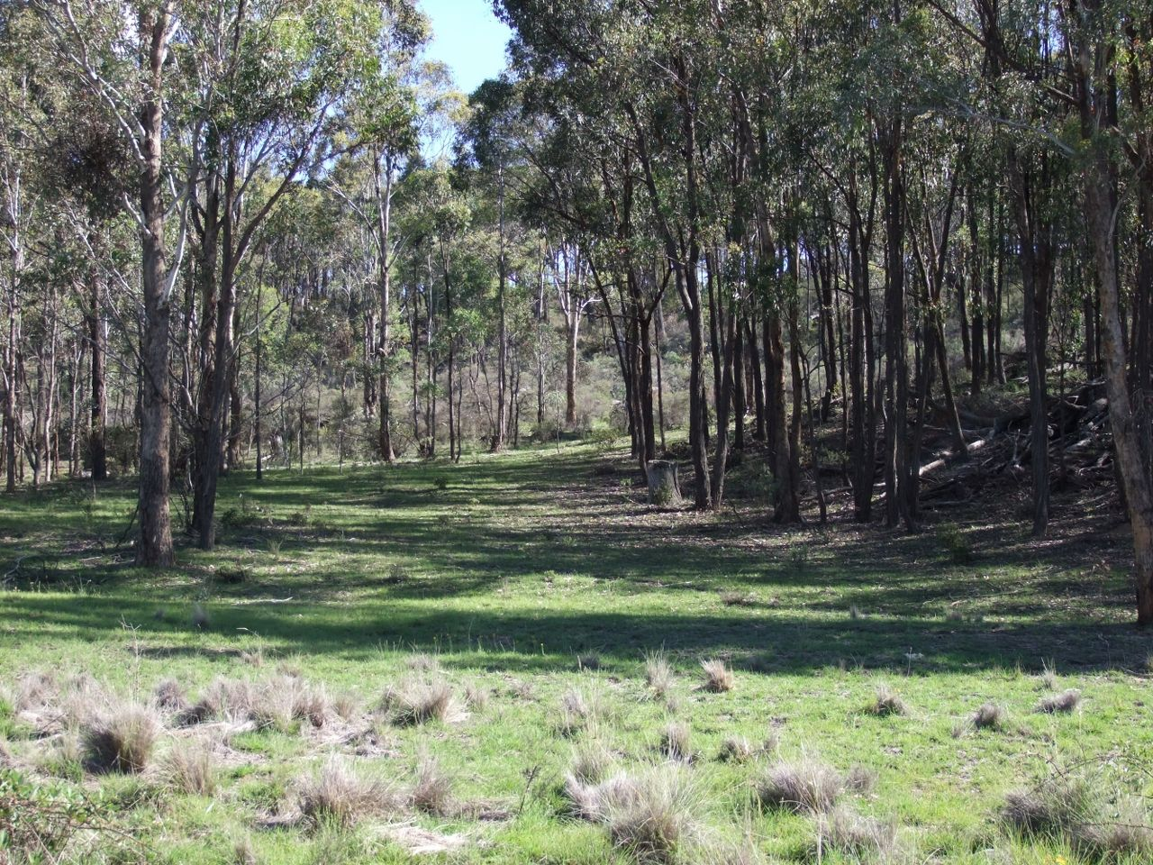 Gowan Road, Orange NSW 2800, Image 0