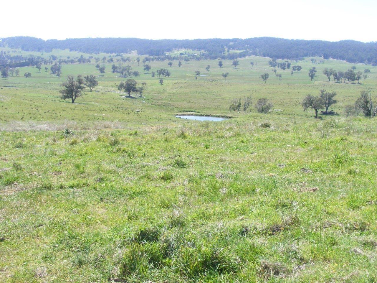Fletchers'/. Mt Mitchell Road, Glencoe NSW 2365, Image 2