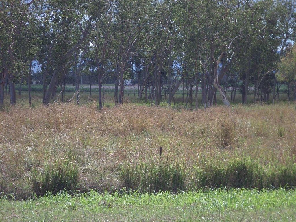 Leichardt Road, Mirani QLD 4754, Image 0