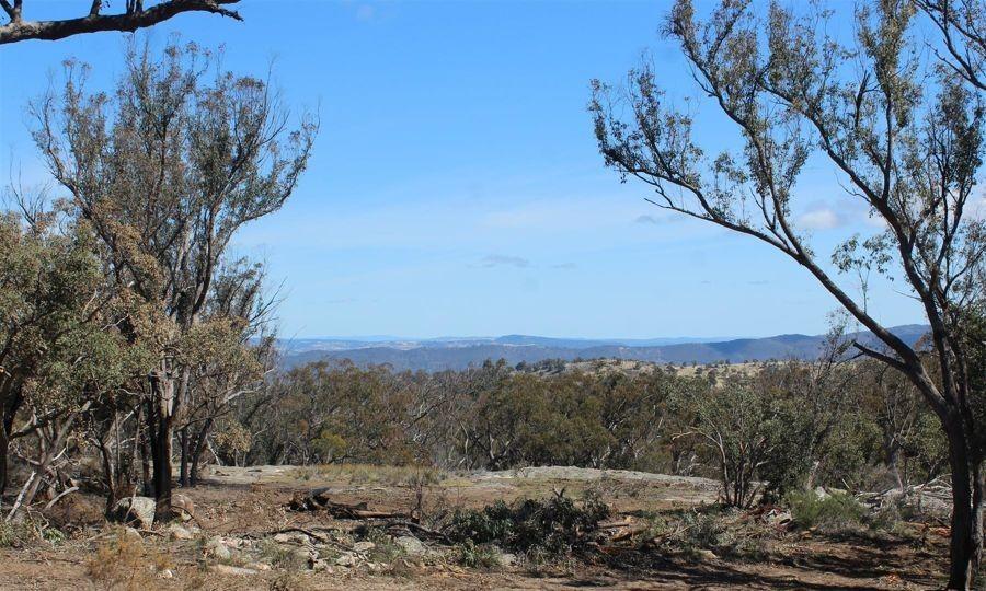 1332 Mount McKenzie Road, Tenterfield NSW 2372, Image 0