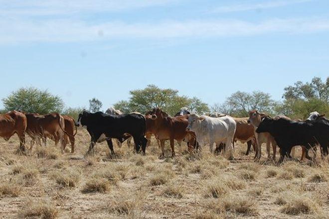 Picture of 670 Prairie Road, MUTTABURRA QLD 4732