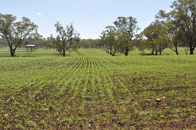 Picture of 705 Coolah Rd, 'Culbara', CASSILIS NSW 2329