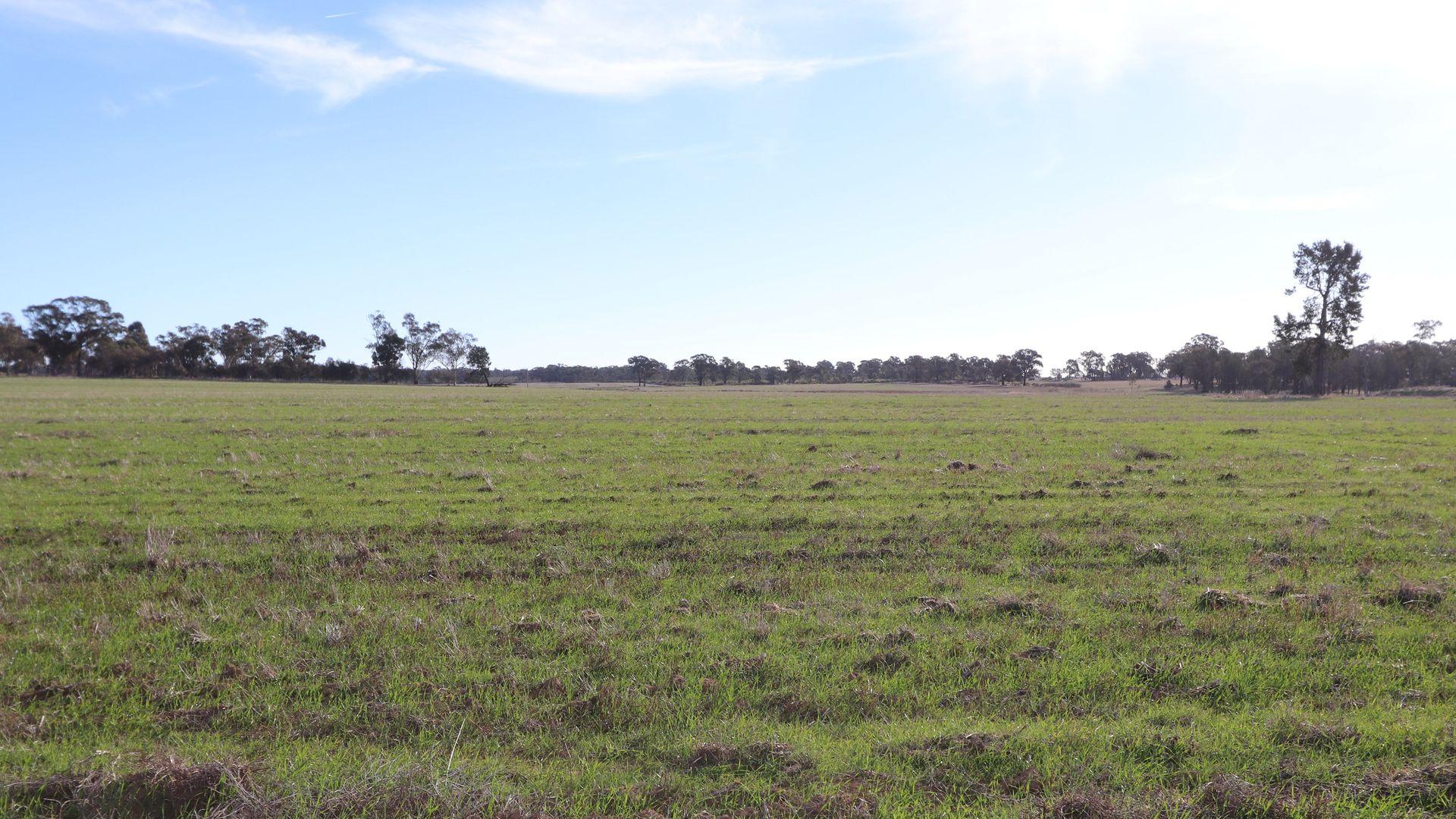 Temora NSW 2666, Image 1