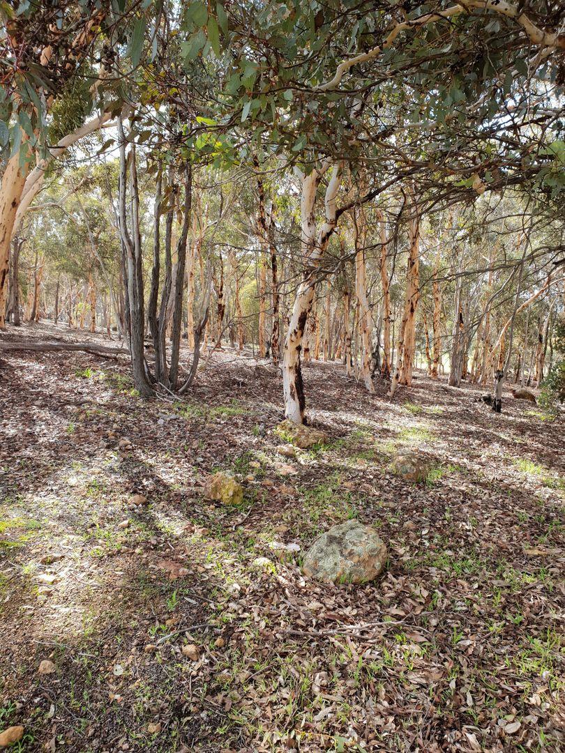 Lot 96 Echidna Close, Wandering WA 6308, Image 2
