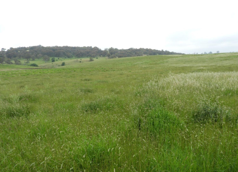 Lot 1 Richlands Road, Taralga NSW 2580, Image 1