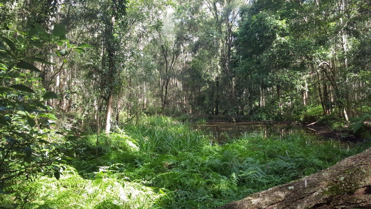LOT 1, 100 Black Pinch Road, Pomona QLD 4568, Image 1