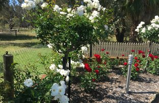 Picture of 49 Evening Peal Court, Darling Downs WA 6122