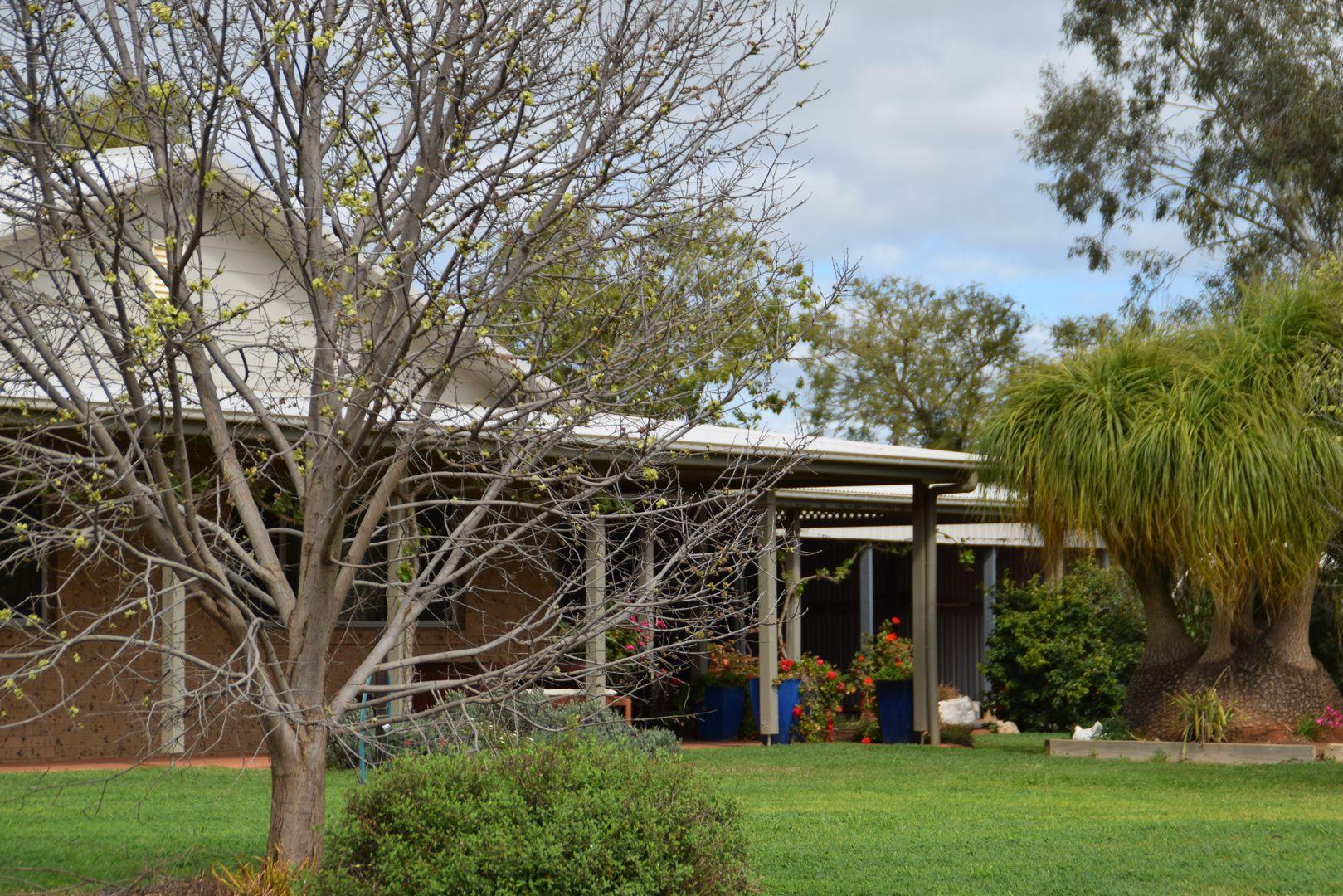 'Redbank' 102L Burraway Road, Terramungamine NSW 2830, Image 1