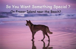 Picture of Fraser Island QLD 4581