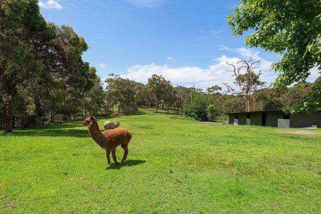 Picture of 99 Violet Town Road, FLORAVILLE NSW 2280