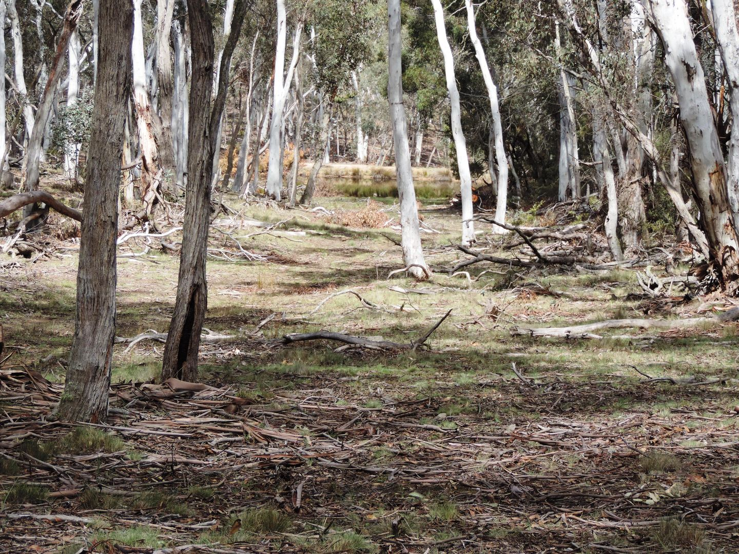 Lot 260 Back Arm Road, Middle Arm NSW 2580, Image 1
