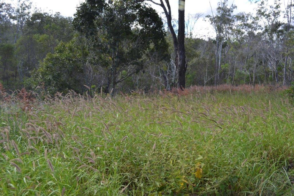 Lot 12 Weale Creek Road, Morinish QLD 4702, Image 1