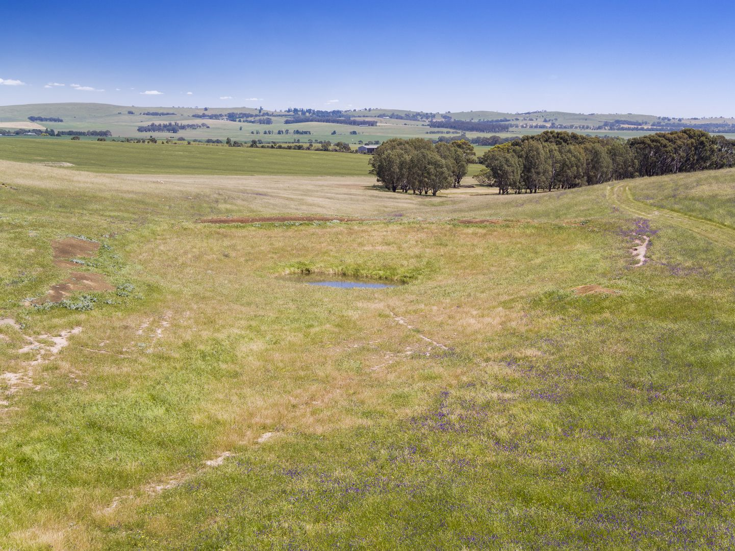 'Horse Paddock', Betterson Road, Hill River SA 5453, Image 2
