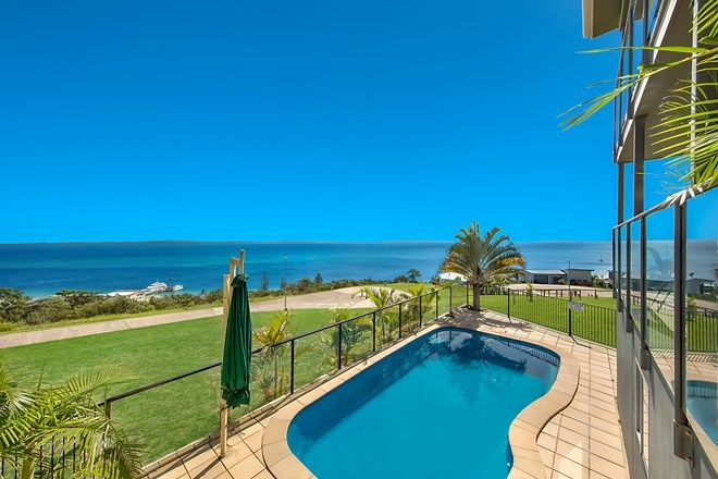6 trochus place tangalooma