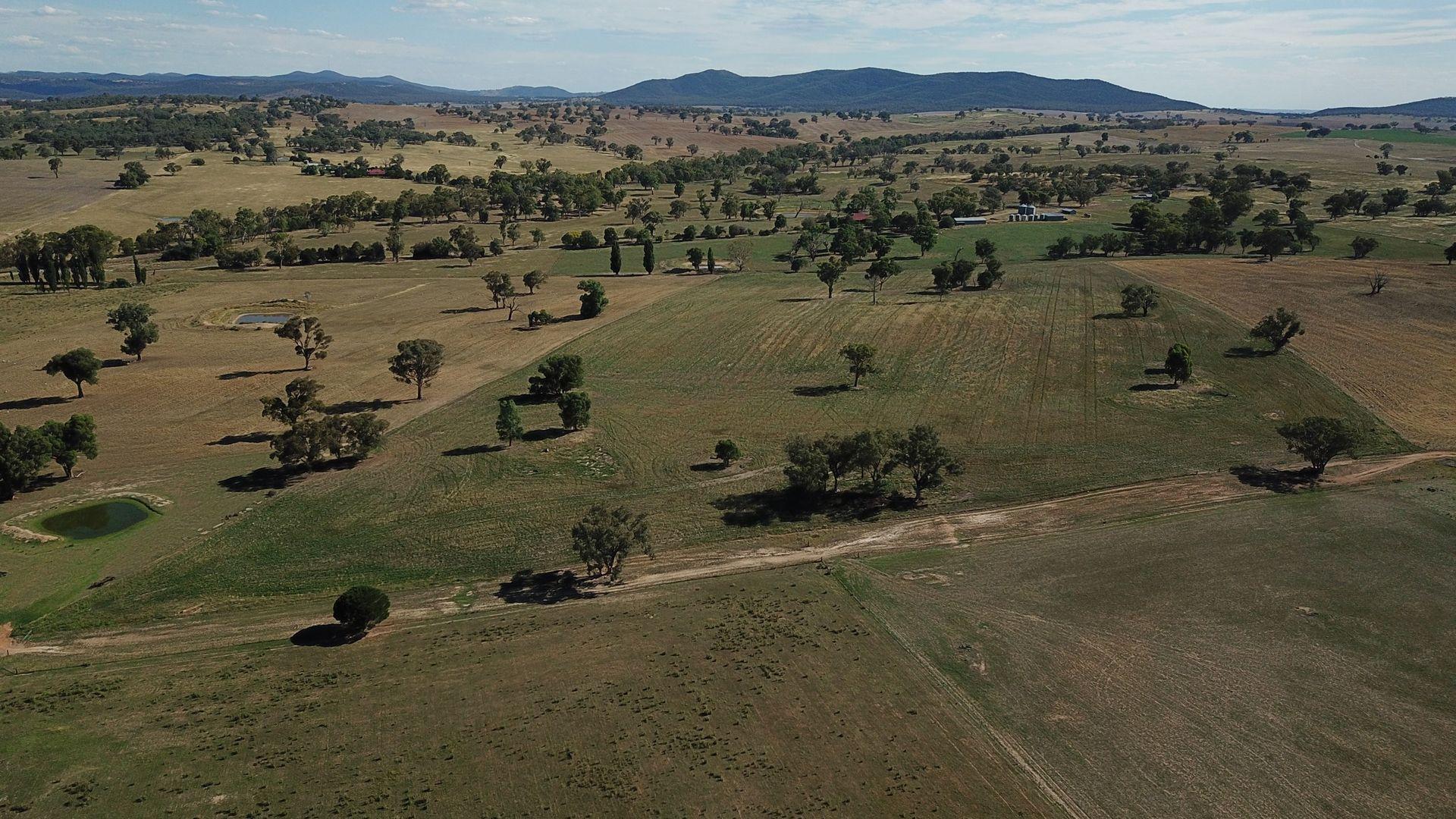 640 Dirnaseer Road, Cootamundra NSW 2590, Image 2