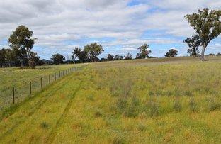 * Bendenine Road, Binalong NSW 2584