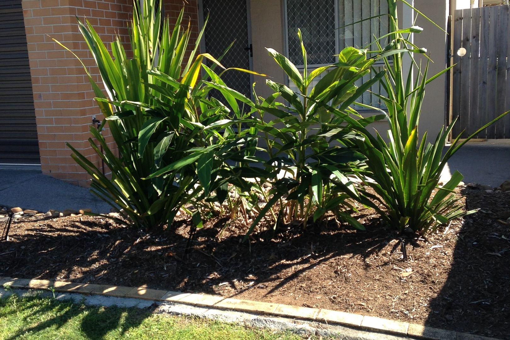 20/19 Magree Street, Kallangur QLD 4503, Image 1