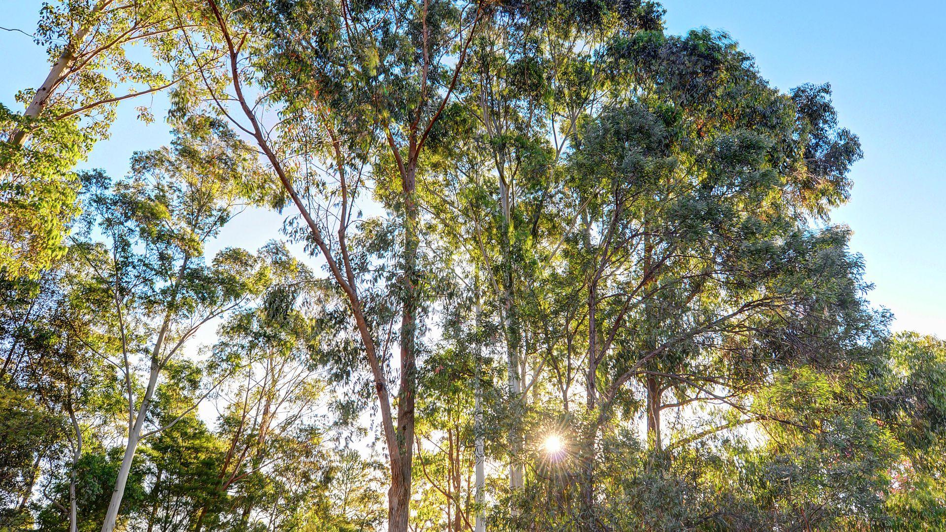 Lot 13/59  Miowera Road , Turramurra NSW 2074, Image 2