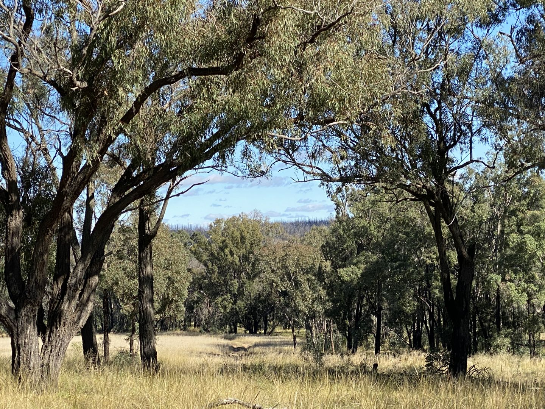 550 Cainbil Road, Coolah NSW 2843, Image 2