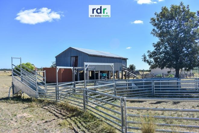 Picture of 1822 The Pocket Road, PINDAROI NSW 2361
